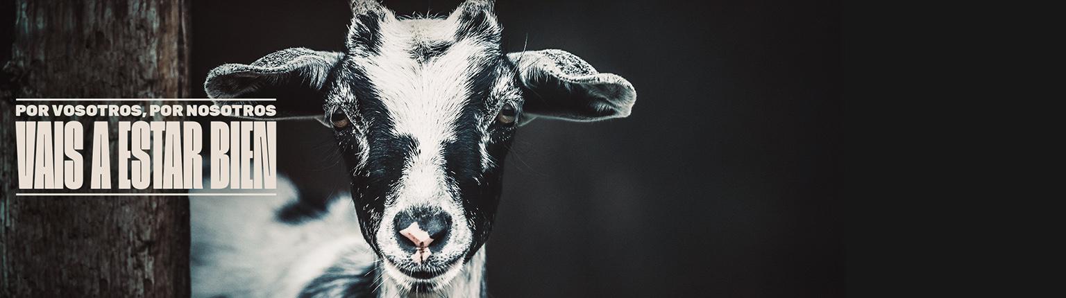 Nueva Campaña de AnimalHUB