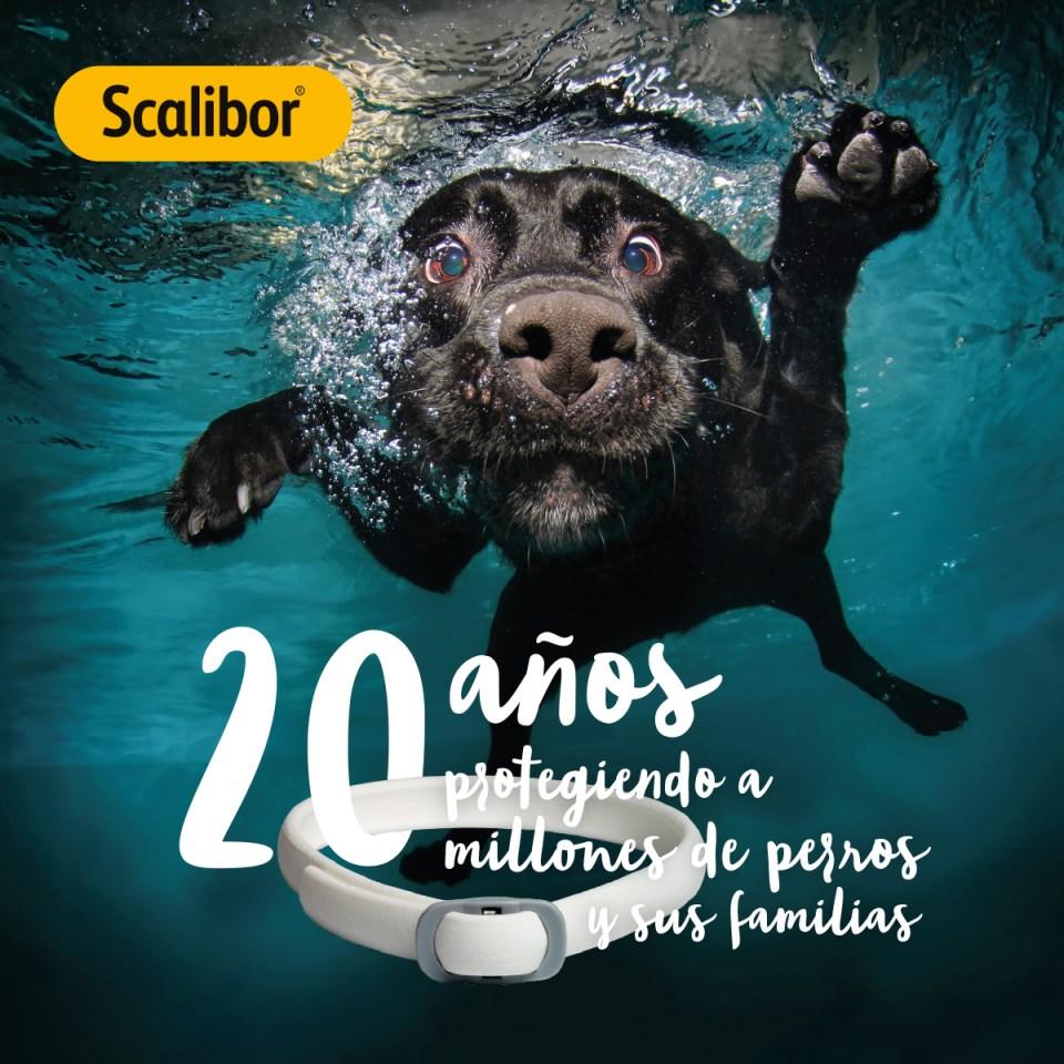 Scalibor®, 20 años protegiendo a millones de perros y sus familias