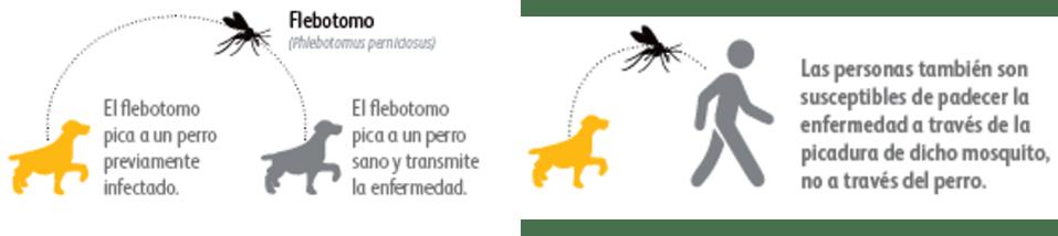 Scalibor y la leishmaniosis canina